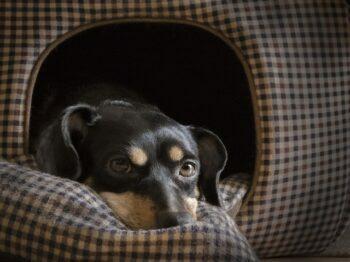 casas para perros pequeños