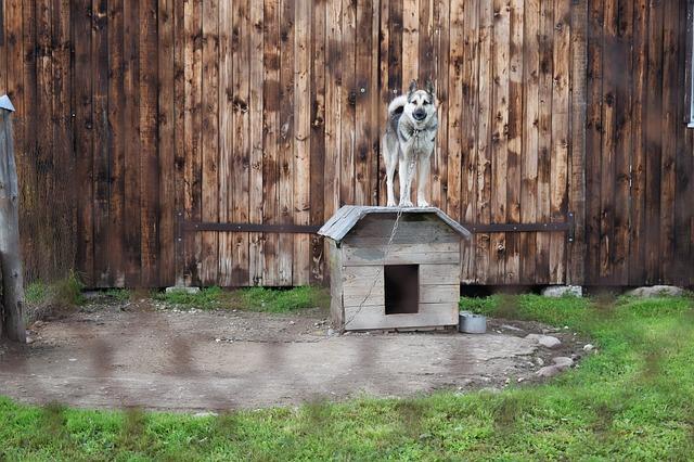 casas para perros grandes