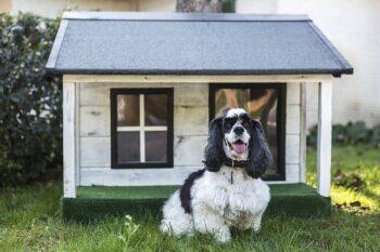 donde comprar casas para perros baratas
